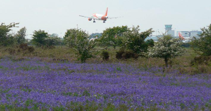 Easy Jet and Bluebells (credit Margaret Webster)